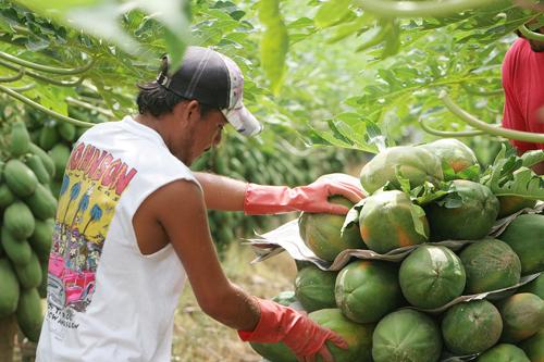 ¿Qué localidades de Morelos, Mujica, Nahuatzen, Nocupétaro y Nuevo Parangaricutiro  pueden solicitar apoyo a fondo perdido para proyectos productivos?