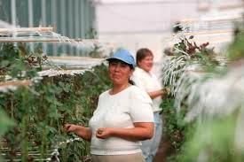 ¿Qué localidades de Nuevo Urecho, Numaran, Ocampo, Pajacuaran, y Panindicuaro pueden solicitar apoyo a fondo perdido para proyectos productivos?