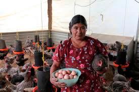 Tacámbaro, Tancítaro, Tangamandapio, Tangancícuaro, Tanhuato y Taretan pueden solicitar apoyo a fondo perdido para proyectos productivos